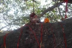 Naturally created Ganesh Idol on Banyan Tree