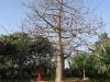 कल्पवृक्ष (Kalpavriksha)
